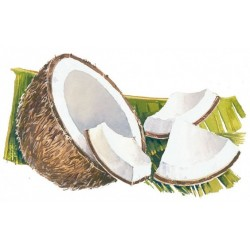 SIROP de Noix de Coco Bigallet 1 L